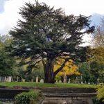 Highgate Cemetery – den unikke victorianske kirkegård